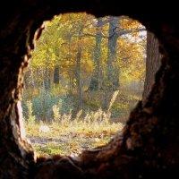 окно в природу :: Александр Прокудин