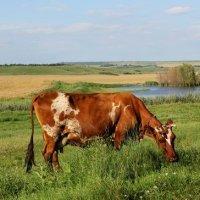 Спит придорожная трава... :: Татьяна Мартенюк