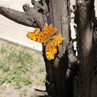 Брошь на дерево :: Самохвалова Зинаида