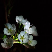 И ночью цветут :: Boston A