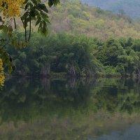 Национальное дерево Тайланда :: Евгений Печенин