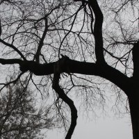 Я  такое  дерево.... :: Валерия  Полещикова