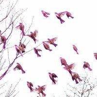 Птицы Счастья :: Zifa Dimitrieva