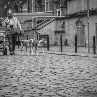 Прогулка с Nikon и борзыми :: Игорь Вишняков