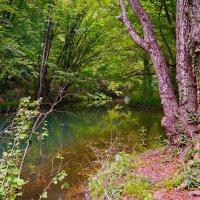 в глубине крымского леса :: Андрей Козлов