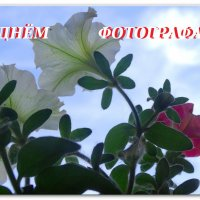 С ПРАЗДНИКОМ ДРУЗЬЯ!!! :: Тамара (st.tamara)