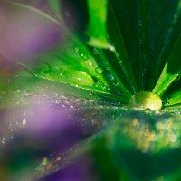 Цвет лета :: Irene Freud