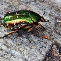 Шустрый жук. :: Natali