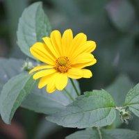 Цветочный хоровод-287. :: Руслан Грицунь