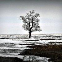 одиночество :: Олег Белан
