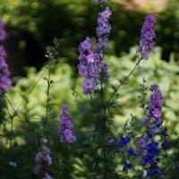 Какие то красивые цветы :: Саша Тарасов