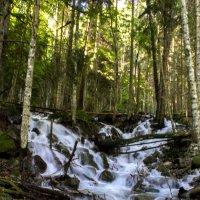 лесные реки :: Katrin Galitsina