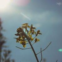 Питание солнцем :: Анастасия Черникова