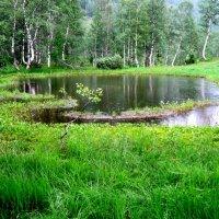 Уголочек рая.Альпийское озерко в ритме дождя. :: Любовь Иванова