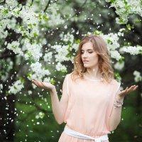 Вишневый снегопад :: D&D Photography