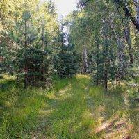 Лесными дорожками :: Татьяна Ломтева