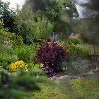 Дивный сад :: Катерина Камышева