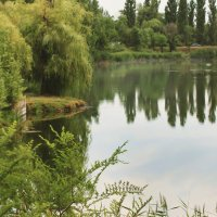 Озеро :: Елена Неведицына