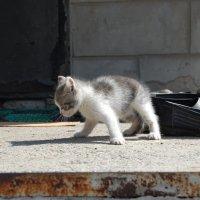 Котенок :: Ann