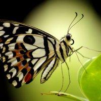 Бабочка и луна :: Alexander Andronik