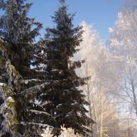 Мороз . :: Эльвира Давлятова