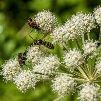 Повседневность у насекомых :: Олег Мартоник