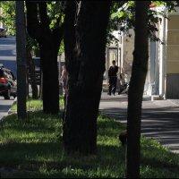 зашумлённая улица :: sv.kaschuk