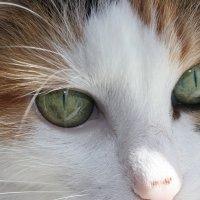 Глазки Елизаветы :: Татьяна Сверчкова