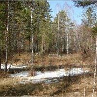 Весенний пейзаж :: galina tihonova