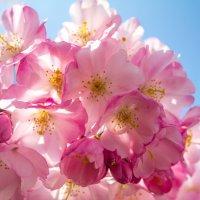 Весна :: Sonya Voloshyna