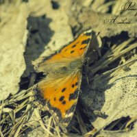первая бабочка :: Алексей Жариков
