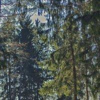 В лесу :: Алексей Жариков