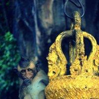 monkey :: Ксения Никитина