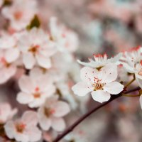 весна :: Алёна Кладова
