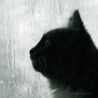Портрет кошки [VII] :: PersONA Incognito