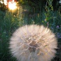 Луч солнца золотого :: ольга хадыкина