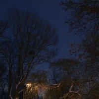 Зимняя ночь :: Exo Gadget