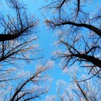 Trees :: Mary mary