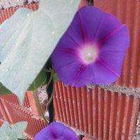 flowers2 :: полина кама