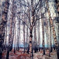 Поздняя осень :: Наталья Варламова