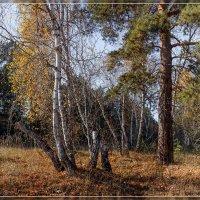 Осень.... :: Евгений Герасименко
