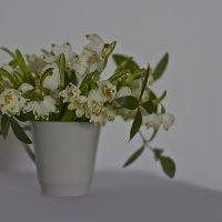 цветы :: Ира Лучко