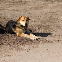 Пёс :: Дмитрий Гридчин