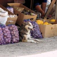 Это южный базар, а я тут собакой работаю :: Игорь Попов