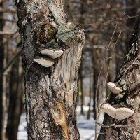 лесные стражи... :: Наталья Щербакова