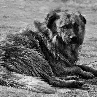 Собака :: Сергей Дячкин