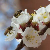 Весна пришла! :: Андрей Lyz
