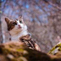 Кошка которая живет в горах :: Солнечная Лисичка =Дашка Скугарева