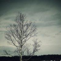 Дерево :: Денис Храменков