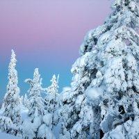 Зимнее утро :: Ирина C